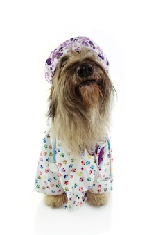 Close-up dog dressed as veterinary wearing stethoscope,  hospital gown and hat.