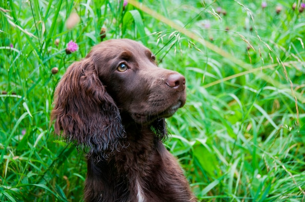 A close-up of a dog in a field