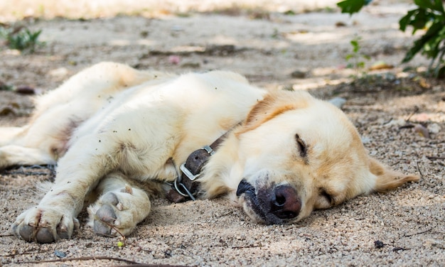 Close up of dog is sleeping on ground in the garden.
