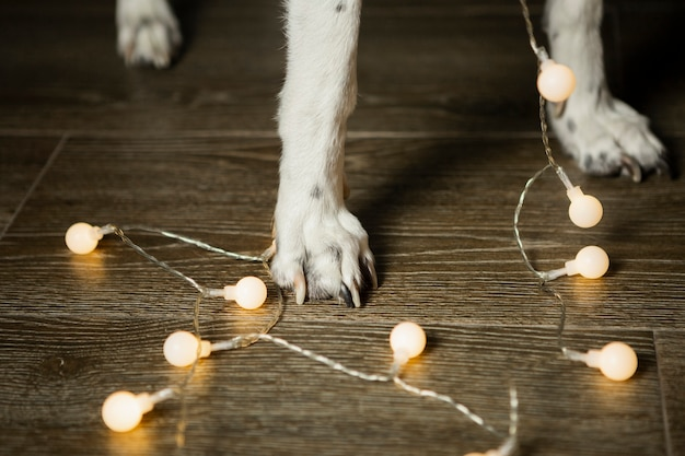 Close-up dog legs with christmas lights