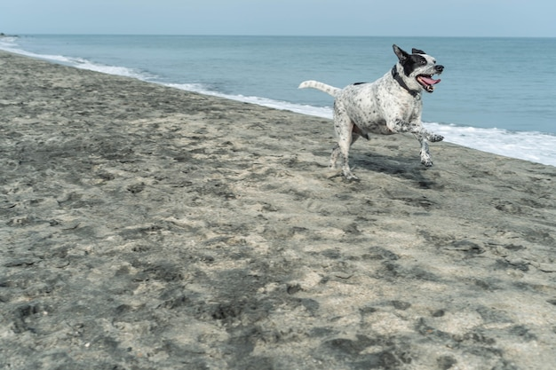 Close-up of dog running in beach