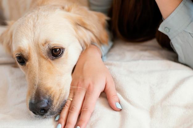 Primo piano cane seduto a portata di mano
