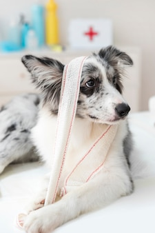 Close-up of a dog with bandage on table