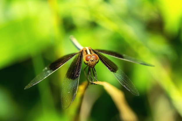 Close up of dragonfly in the garden