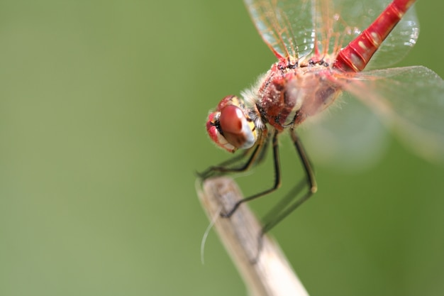 Close-up of a dragonfly on a twig