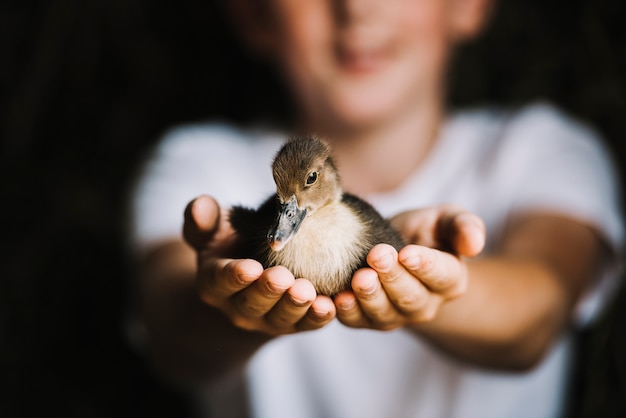 Close-up of duckling on boy's hand