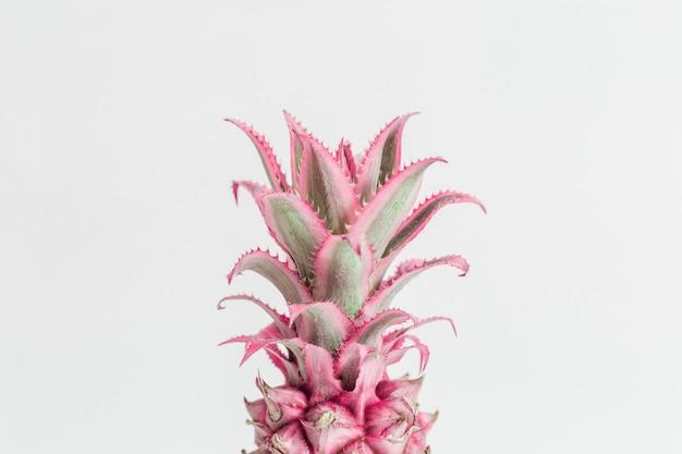 ドワーフ観賞用ピンクパイナップルの花をクローズアップ