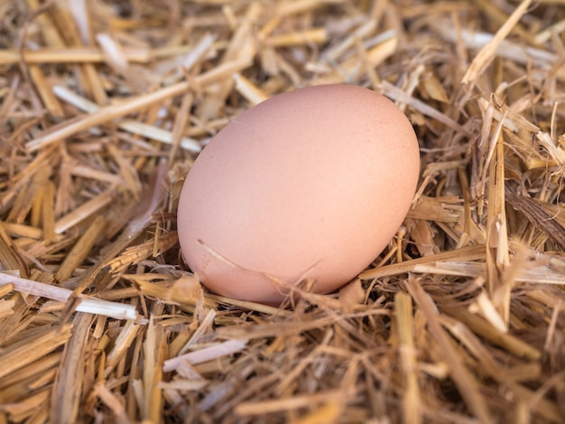 Close up of egg on straw