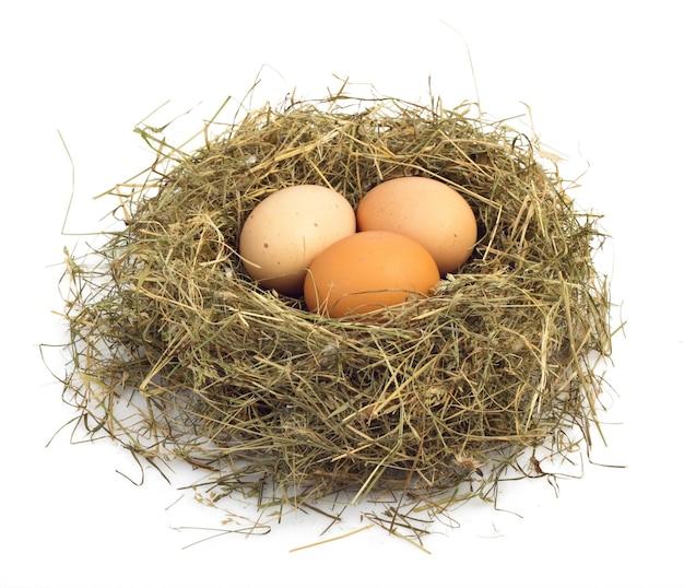 巣の中で卵をクローズアップ