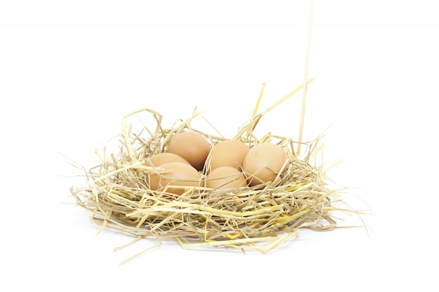 Close-up eggs isolated studio shot on white background