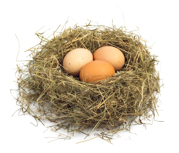 Close up eggs in a nest