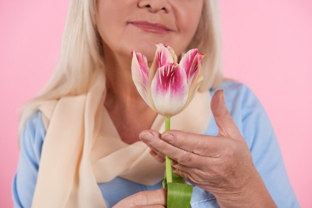 Close up. elderly woman is sniffing tulip.