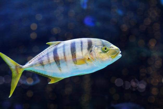 Close up of exotic fishes in an aquarium.