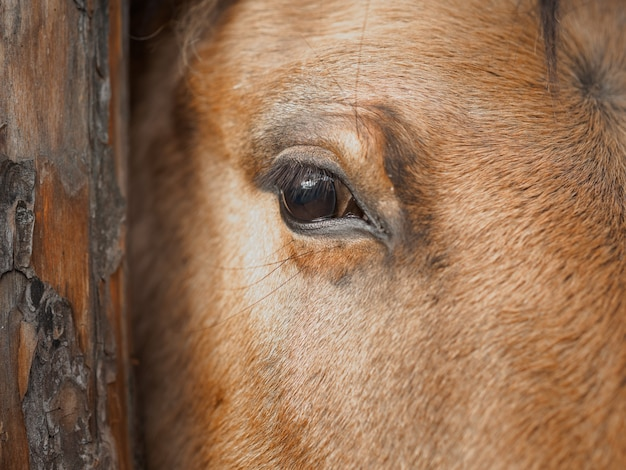 Close up of the eye of a horse Premium Photo