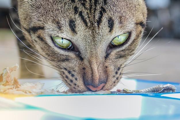Крупный план лицо милый кот есть пищу