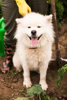 Close-up farmers dog in garden
