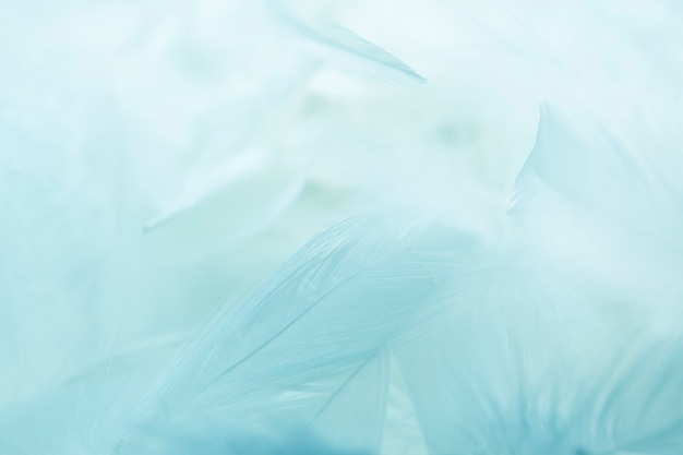 Close up feather background