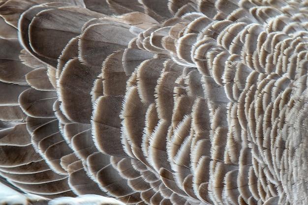 背景の羽ガチョウを閉じる