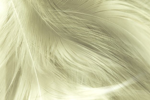 Close up feather texture background