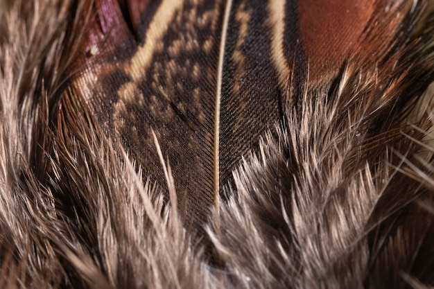 Close-up feathers organic background
