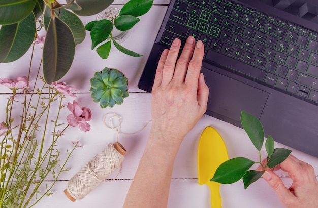 Close-up of female adult hands are holding a ficus stalk and are typing on a laptop keyboard.