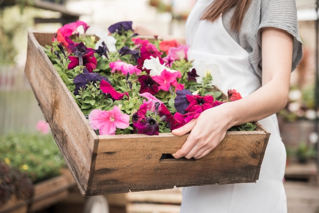 Close-up of a female florist holding big wooden box with colorful petunias flowering plants