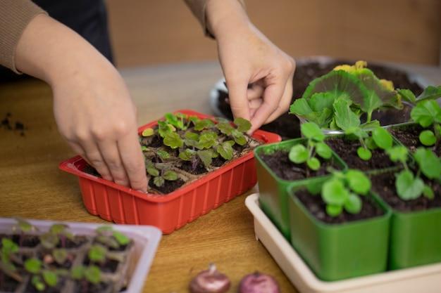 가정 정원에서 식물을 재배하는 여성 정원사를 닫습니다