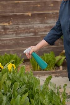 スプレーボトルでスイバ植物に水をまく女性庭師の手を閉じる