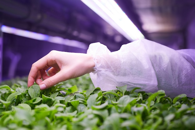 Close up of female hand gently touching young green plants in nursery greenhouse, agricultural engineering concept, copy space