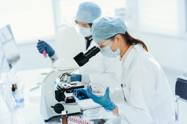 Закройте вверх. женщина-ученый с чашкой петри, сидя за лабораторным столом.