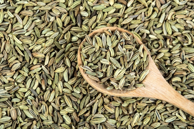 Close up  fennel seed on white background