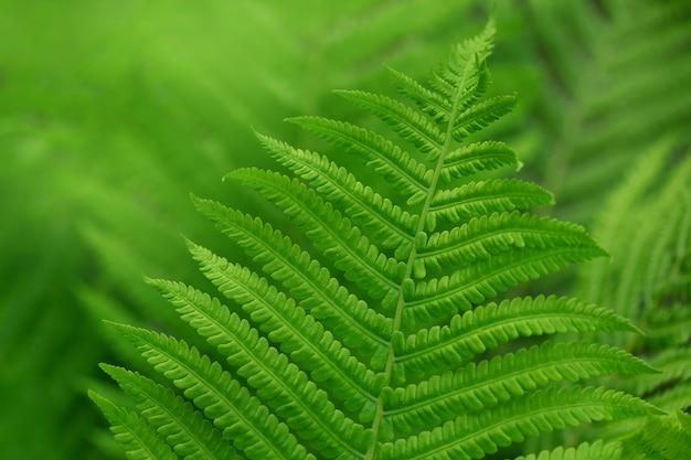 숲에서 고 사리 잎을 닫습니다