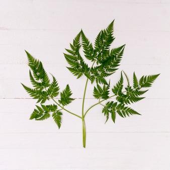 Close-up fern leaf on wooden background