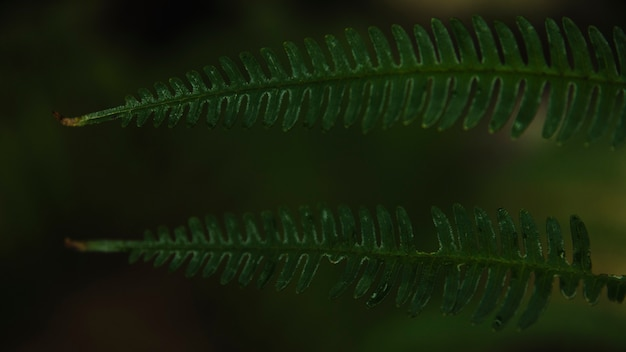 Close-up fern leaves