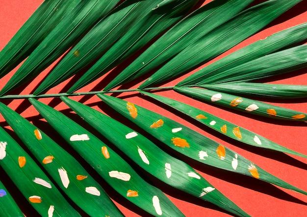 Close-up fern minimal nature still life concept