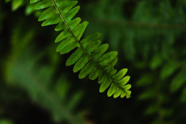 Close-up fern twig