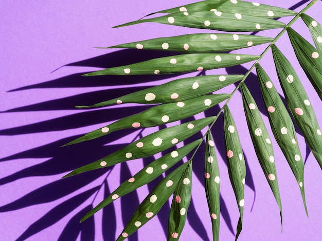 Close-up fern with dots and shadows in background