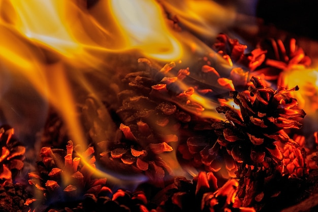 Close up on a fire with pine cones