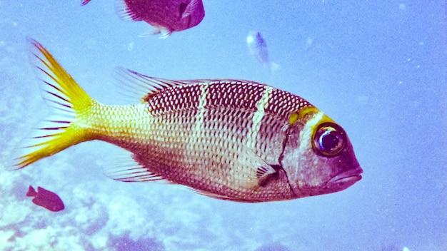 Close up fish in maldives.