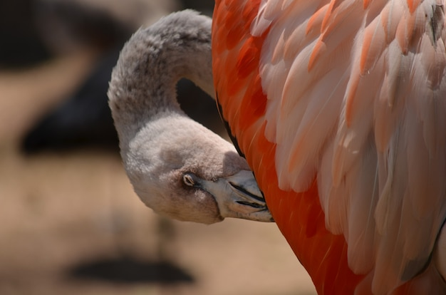 Close-up of a flamingo's head