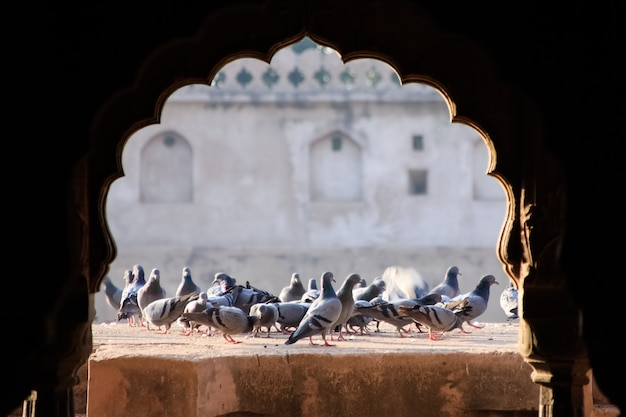 오래 된 벽 배경에 비둘기의 무리를 닫습니다.