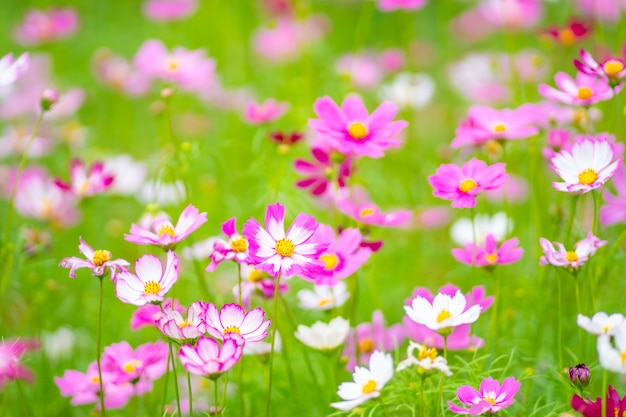 꽃 다채로운 동작 흐림 배경 자연과 여행 개념을 닫습니다
