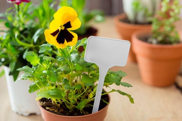 Цветок крупным планом в горшке с картонным макетом