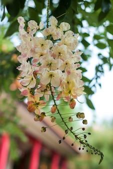 Крупный план цветок в саду