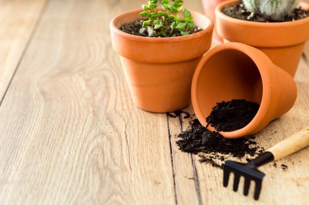 土と植物のクローズアップ植木鉢