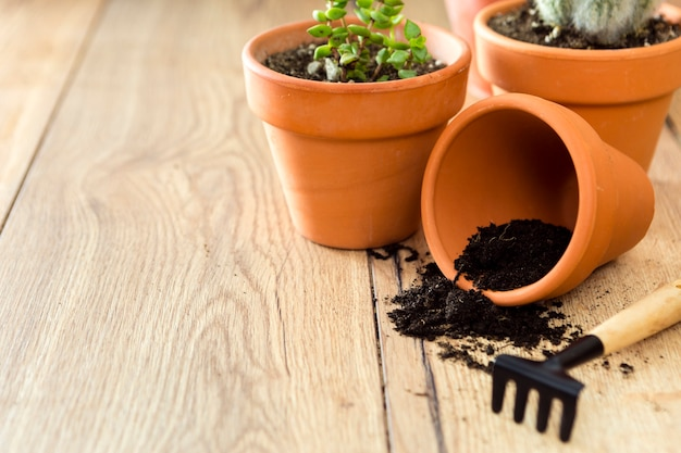 Close-up flower pot with soil and plants