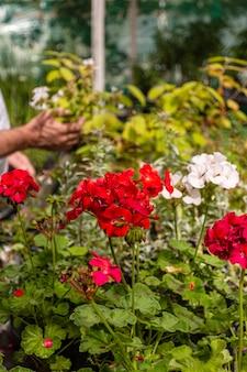 정원에서 꽃을 닫습니다