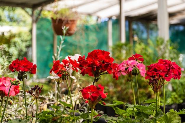Закройте цветы в саду