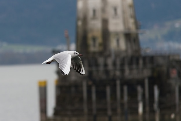 Close up on flying seagull in the harbor