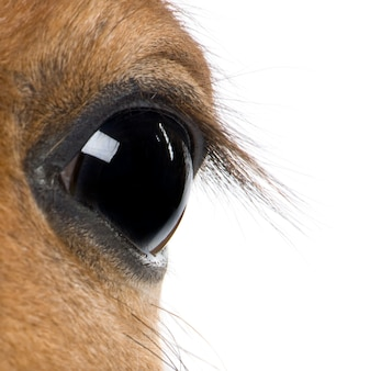 Close-up of foal's eyeon white isolated